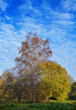Árbol del otoño con follaje brillante en un cielo azul Fotos de archivo libres de regalías