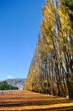 Árbol del otoño con la naturaleza hermosa en Nueva Zelanda Imágenes de archivo libres de regalías