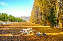 Árbol del otoño con la naturaleza hermosa en Nueva Zelanda Imagenes de archivo