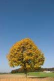 Árbol del otoño en campo Fotografía de archivo