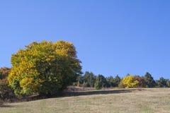 Árbol del otoño en el campo Imágenes de archivo libres de regalías