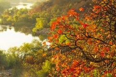 Árbol del otoño en el río Imagen de archivo