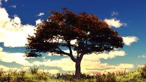 Árbol del otoño en la colina soleada HD