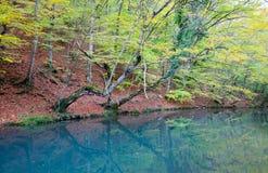 Árbol del otoño en la orilla del río de la turquesa Foto de archivo libre de regalías