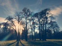 Árbol del otoño en la sol, efecto retro Imagen de archivo
