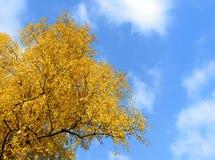 Árbol del otoño en un fondo del cielo azul Fotografía de archivo