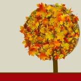 Árbol del otoño   Modelo de la tarjeta del concepto. EPS 8 Fotografía de archivo