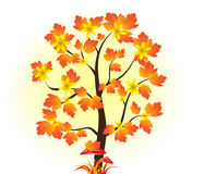 Árbol del otoño Otoño Setas Fotos de archivo libres de regalías