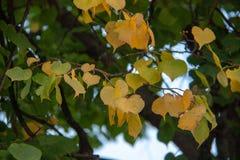 Árbol del otoño por completo de las hojas del verde y del amarillo foto de archivo