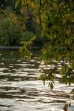 Árbol del otoño por completo de las hojas del verde y del amarillo en una puesta del sol imagen de archivo