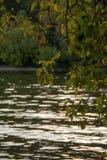 Árbol del otoño por completo de las hojas del verde y del amarillo en una puesta del sol fotos de archivo