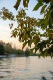 Árbol del otoño por completo de las hojas del verde y del amarillo en una puesta del sol fotos de archivo libres de regalías