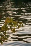 Árbol del otoño por completo de las hojas del verde y del amarillo en una puesta del sol fotografía de archivo libre de regalías