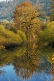 Árbol del otoño reflejado en agua Fotos de archivo