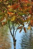 Árbol del otoño sobre el agua Foto de archivo