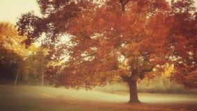 Árbol del otoño del vintage Imágenes de archivo libres de regalías