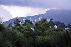 Árbol del pájaro, Nuwara Eliya, Sri Lanka Imágenes de archivo libres de regalías