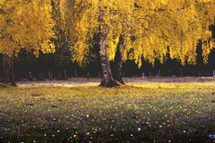 Árbol del paisaje foto de archivo libre de regalías