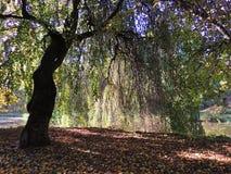 Árbol del paisaje de la caída Imagen de archivo libre de regalías