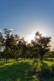 Árbol del parque Foto de archivo libre de regalías