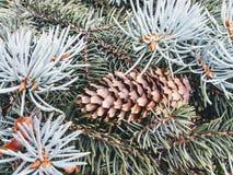 Árbol del Pin imagen de archivo libre de regalías