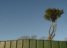 árbol del pirata foto de archivo libre de regalías