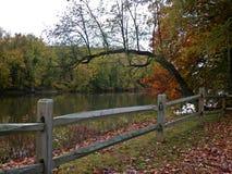 Árbol del puente Foto de archivo libre de regalías