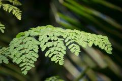 Árbol del rábano picante Fotos de archivo libres de regalías