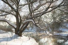 Árbol del río del invierno fotos de archivo