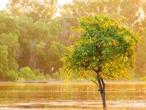 Árbol del río y luz del sol Foto de archivo libre de regalías