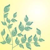 Árbol del resorte Foto de archivo libre de regalías