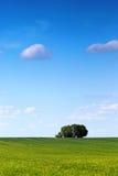 Árbol del resorte foto de archivo