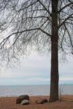 Árbol del resorte Fotografía de archivo libre de regalías