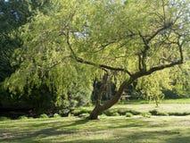 Árbol del resorte con la fractura de los brotes Imagen de archivo libre de regalías