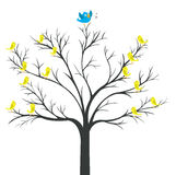 Árbol del rey del Azul-pájaro Foto de archivo