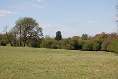 Árbol del roble y de pino en el parque del país del señorío fotografía de archivo