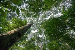 Árbol del rompecabezas Imagen de archivo libre de regalías