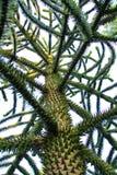 Árbol del rompecabezas de mono Imagen de archivo libre de regalías