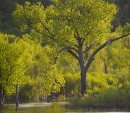 Árbol del salmo 1 Foto de archivo libre de regalías