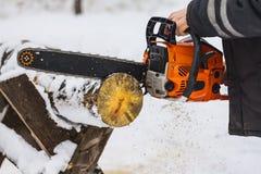 Árbol del sawing de la sierra Fotografía de archivo