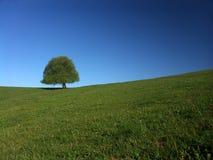 Árbol del solitario Foto de archivo libre de regalías