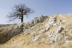 Árbol del solitario Fotos de archivo