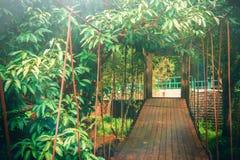 Árbol del túnel sobre el puente fotografía de archivo libre de regalías