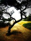 Árbol del tiempo Foto de archivo libre de regalías