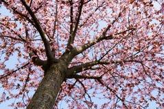 Árbol del tiempo de resorte Foto de archivo libre de regalías