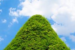 Árbol del triángulo con el cielo azul Fotos de archivo