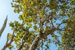 Árbol del tronco con una rama y una hoja Foto de archivo libre de regalías