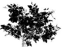 Árbol del umbral imagen de archivo