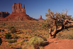 Árbol del valle del monumento Fotos de archivo