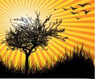 Árbol del vector con puesta del sol libre illustration